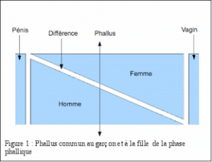 phase-phallique